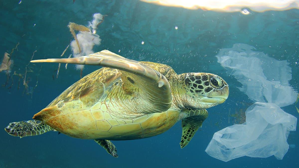 Meeresschildkröte im Wasser umgeben von Plastik